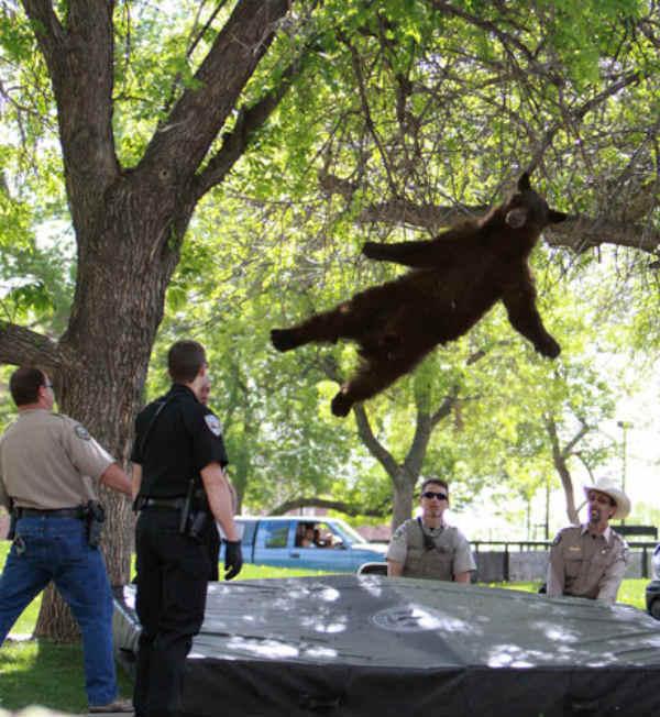 AirBear Bear on Trampoline